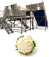 cauliflower-processing-line