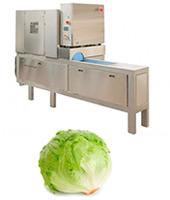 Lettuce Decorex 1 lines