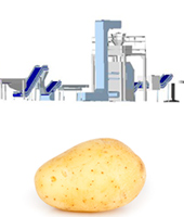 Potato processing line