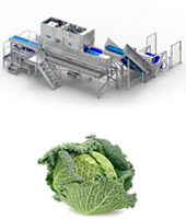 Cabbage-processing-line