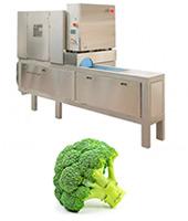 Máquina corte brócoli