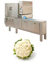 Máquina corte coliflor