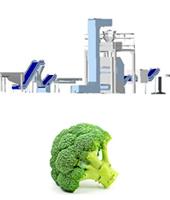 Línea procesado completo de brócoli